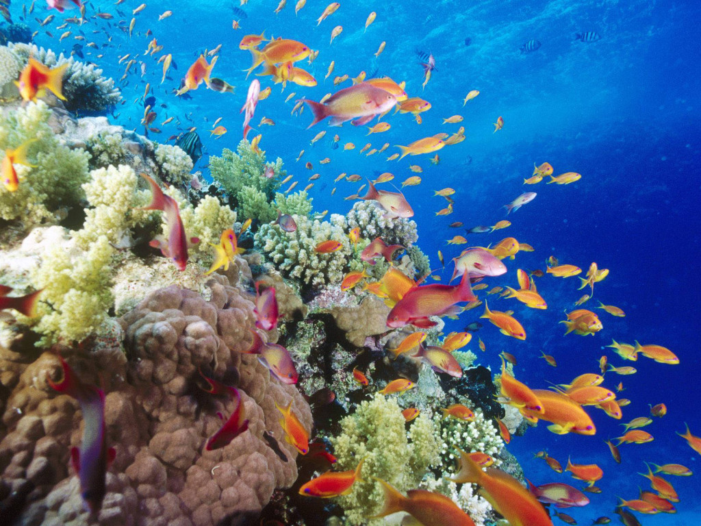 Coral Reef- Southern Red Sea- Near Safaga- Egypt