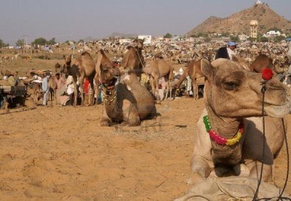 pushkar-festival-
