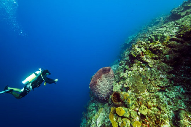 diving-the-wall-west-caicos_540x360